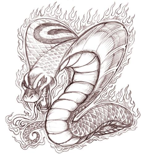 Cobra Snake Head Drawing